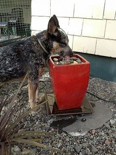Backyard Dog Run Ideas Water Features 42 Ideas dog park backyard Backyard Dog Run Ideas Water Features 42 Ideas Dog Friendly Backyard, Dog Backyard, Backyard Ponds, Backyard Ideas, Garden Ideas, Cat Run, Big Dogs, Dogs And Puppies, Doggies