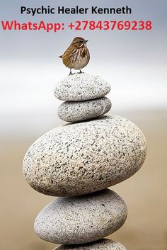 **Zen in nature: On the top ; Small Birds, Love Birds, Beautiful Birds, Pet Birds, Tiny Bird, Mundo Animal, Fauna, Stone Art, Pebble Stone