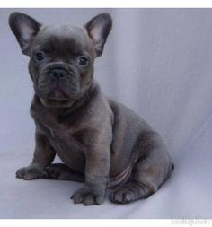 Visit Our Internet Site For Additional Information On Puppies It