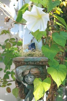 Moon Flower - the flowers only open in the evening or on very cloudy days.  You can only smell their scent at night when the blossoms open.  So much fun to grow but be sure you have something very tall for the vines to climb!