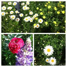 My Garden ,2017,