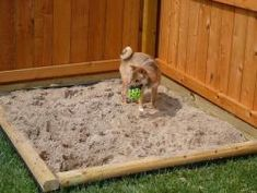 A Dog Dig Box - protect the lawn and garden