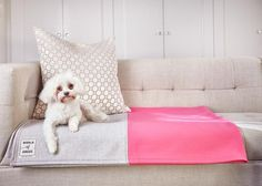 The Dog Blanket - World of Angus