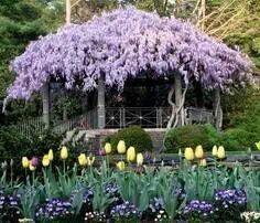 pergola covered with wisteria. I have the wisteria.I just need the pergola! Outdoor Gardens, Beautiful Gardens, Backyard Pergola, Pergola, Patio Garden, Plants, Wisteria, Dream Garden, Backyard