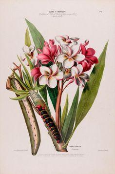 flore-damerique-etienne-denisse-08