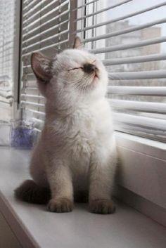 Ahhh, good morning sunshine...