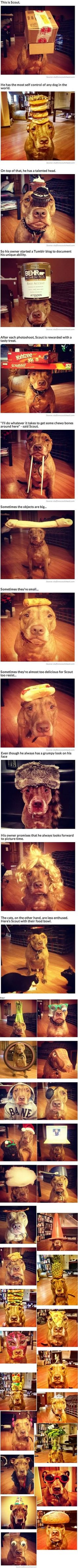 This dog can balance anything on his noggin!