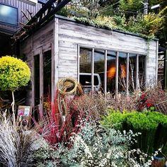 今日2つ目のpick 大阪府茨木市 大型園芸店 #thefarmuniversal さんへ 裏道で約15分 空いてました❗ お花を少し買いに 生花売場の外です 屋根に 草木が、、、、 #園芸店#ユニバーサル園芸