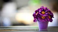 Purple Flowers Desktop Wallpapers THIS Wallpaper Hd Flower Wallpaper, Purple Flowers Wallpaper, Hd Flowers, Wallpaper Free, Beautiful Flowers Wallpapers, Table Flowers, Wallpaper Backgrounds, Wallpaper Desktop, Hd Desktop