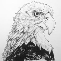Finished the inkwork- now should I colour and do arty things on Photoshop? #Art #design #Eagle