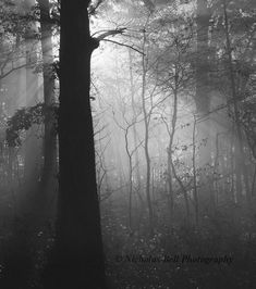 Nicholas Bell Photography gorgeous #forest black and white photo!