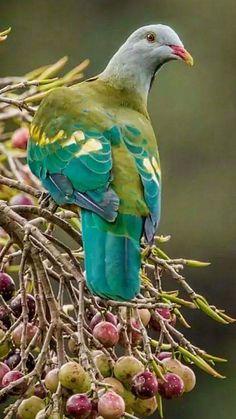 Photo - #birds