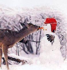 Hey wait..... you're stealing my nose! Snowman, Deer, Kangaroo, Animals, Animales, Animaux, Snowmen, Animal, Dieren