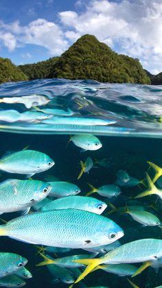 Palau Diving Center, Malakal island, diving, tourism, travel