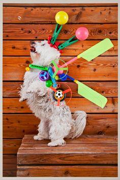 Kira - social-worker-dog