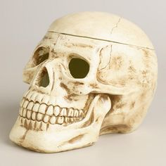 """Paper Pulp Skull Container... remove the top for space to store all your creepiest trinkets. His realistic grin adds a fearsome feel to any décor (handcrafted; paper pulp; not food safe; not heat resistant; approx. 6""""W x 8.5""""D x 6""""H; 12.99) 