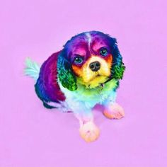 Ramzy Masri is a talented Brooklyn-based graphic designer who uses rainbow colors as a major inspiration for his artwork. Pretty Animals, Colorful Animals, Cute Funny Animals, Cute Baby Animals, Animals Beautiful, Animals And Pets, Cute Puppies, Cute Dogs, Rainbow Dog