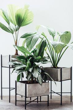 to add in my client livingroom Home Design, Home Interior Design, Interior Decorating, House Plants Decor, Plant Decor, Diy Bedroom Decor, Living Room Decor, Bokashi, Decoration Plante