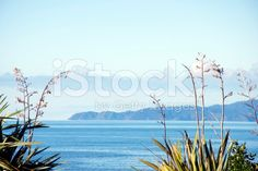 New Zealand Flax and Seascape royalty-free stock photo