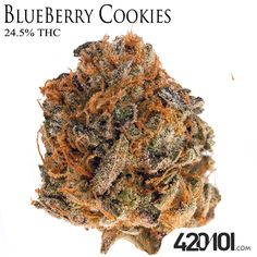 The Best Galaxy Cookies Strain