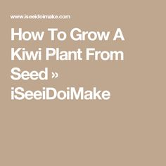 How To Grow A Kiwi Plant From Seed » iSeeiDoiMake