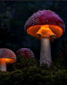 coffee and cigarettes - lori-rocks: Light Dreams… by Moonshroom