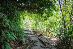 Penang National Park Monkey Beach Trek Malaysia #penang #monkeybeach #jungletrek #Malaysia