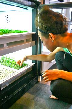 Sprouting! #UrbanCultivator