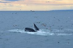 From the last Boston Harbor Cruises whale watch of the 2014 season. photo by New England Aquarium naturalists Tegan, Rich and Jessica