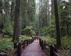 MacMillan Provincial Park (Cathedral Grove) is one of 10 Amazing Places in the Mount Arrowsmith Biosphere Region. In a cathedral-like grove of old-growth Douglas firs, MacMillan Provincial Park is known for its majestic grandeur. Vacation Destinations, Vacation Trips, Firs, Douglas Fir, Vancouver Island, Amazing Places, The Good Place, Cathedral, To Go