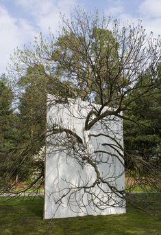 Letha Wilson . wll in blue ash tree, 2011