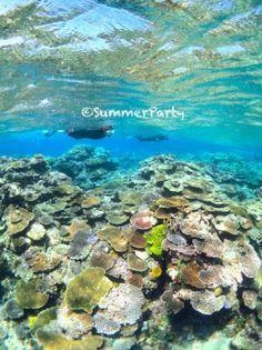 八重干瀬のサンゴ礁 大自然に囲まれた宮古島の見所スポットを集めました!