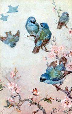 birds, pour transfert