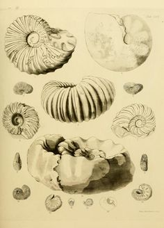 The fossils of the South Downs : - Biodiversity Heritage Library. http://biodiversitylibrary.org/page/31183652