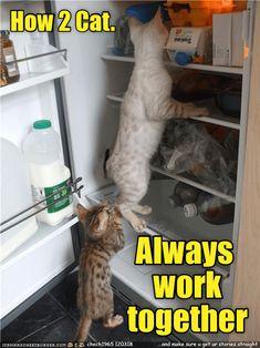 How 2 Cat. http://cheezburger.com/9137278976