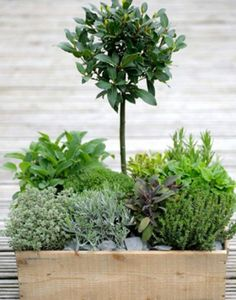 Garden Plants | StyleNest
