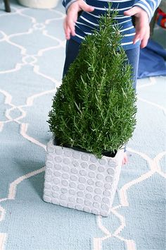 rosemary trees at Lowe's for $10 during the holidays, get cute planters from HG, flank your front door, done!