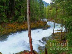 Title:  Winding Through The Lush Forest - Mount Rainier National Park   Artist:  Photography Moments - Sandi   Medium:  Photograph - Print - Painting - Photography