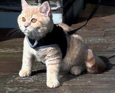 cute teddy-bear cat