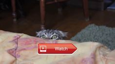 😸 Funny cat compilation 😼 😽 on Pet Lovers 😻