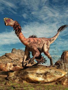 Citipati (dinosaurio ovirraptórido del Cretácico de Asia, 80Ma) (Daniel Eskridge)