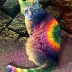 Hippie rainbow cat Aww, what a pretty kitty! Crazy Cat Lady, Crazy Cats, I Love Cats, Cool Cats, Animal Gato, Chesire Cat, Photo Chat, Here Kitty Kitty, Happy Kitty