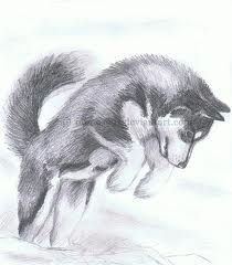 siberian husky drawing - Google Search