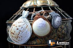 Real Cockle Shell Wire Wrapped Pendants by GutsyGirlJewelry on Etsy