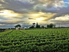 Vineyards in Robertson - Boland - Western Cape - South Africa. Sa Tourism, Places To Travel, Places To Go, Provinces Of South Africa, Wineries, Countries Of The World, Far Away, Cape Town, Live