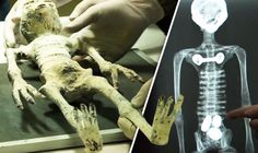 AN ALLEGED mummified alien corpse & its eggs, found inside an ancient tomb in Peru.