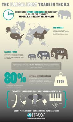 How the U.S. Participates in the Ivory Trade (INFOGRAPHIC)