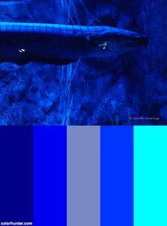 Bristol+Aquarium+8th+July+2014+(18)+Color+Scheme Electric Blue, Bristol, Color Schemes, 18th, Palette, Coding, Colors, Hair Inspiration, Aquarium