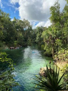 If you are looking for a fun day trip experience, this guide contains all the best Florida springs to visit! Find out which freshwater springs in Florida are best for swimming, paddling and more #florida #freshwatersprings #bucketlist Best Florida Springs, Blue Springs State Park, Florida Vacation, Florida Travel, Places To Rent, Places To Visit, Springs Near Orlando, Kelly Park, Rock Springs