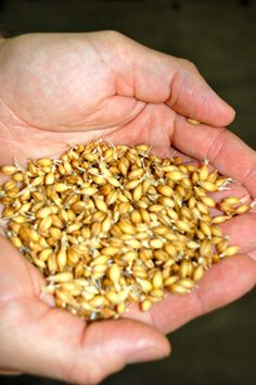 Oats, Wheat & Rye: What Adjunct Grains Add to Your Beer | CraftBeer.com